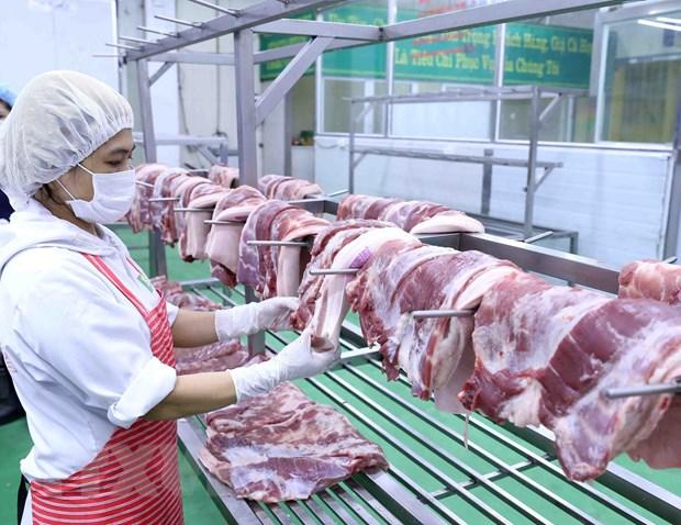 Những con lợn được chăn nuôi theo quy trình công nghiệp gần như không nhiễm sán lợn.
